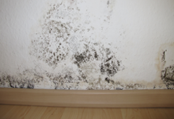 Mold & Mildew Removal
